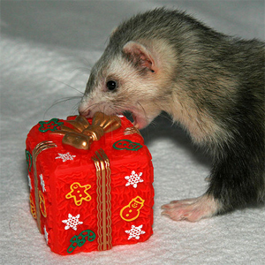christmasferret